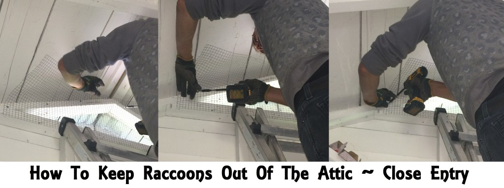 Raccoon Barrier Attic