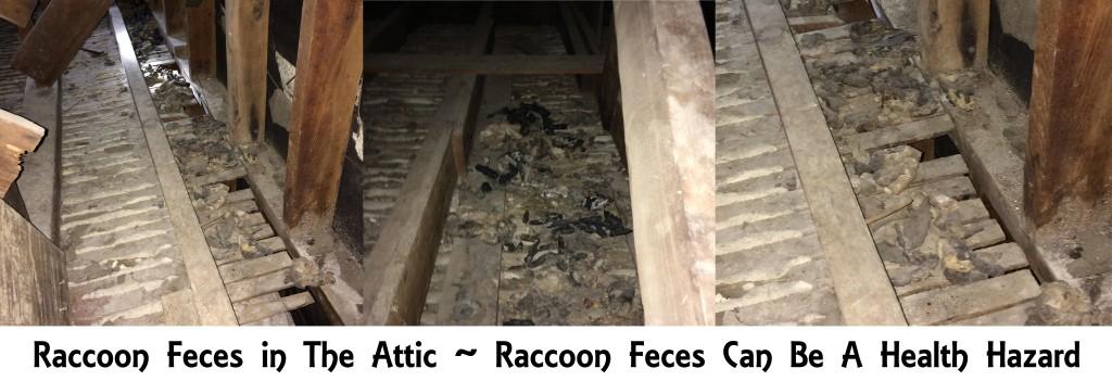 Raccoon Feces banner